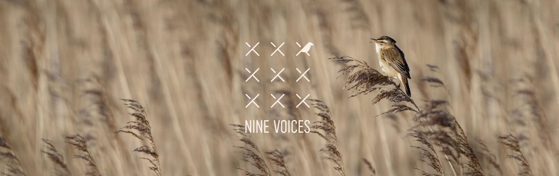 Nine voices